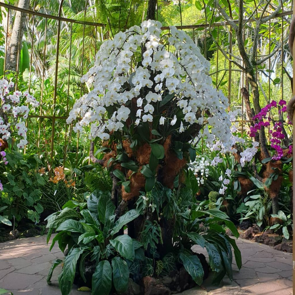 The Orchid Garden is the fruit of years of the hard-working team since decades ago and is the main attraction in Singapore Botanical Garden.